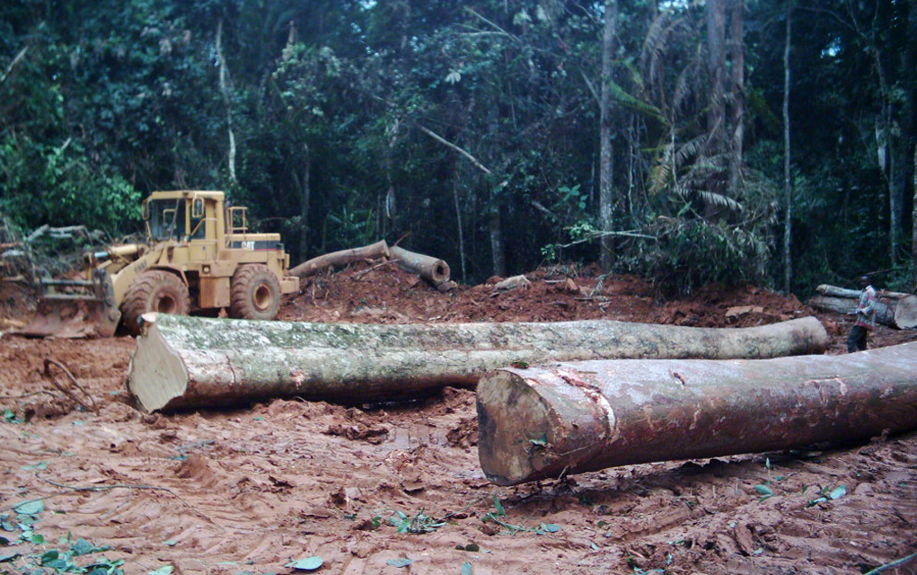 Industrial logging has been the largest contributor to deforestation in the tropical forests of Central Africa, threatening the culture of the indigenous people who live there.